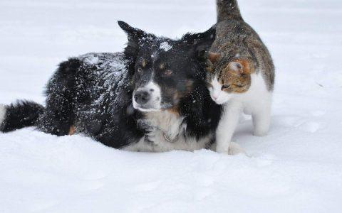 宠物猫咪和狗狗减肥需要做以下四件事
