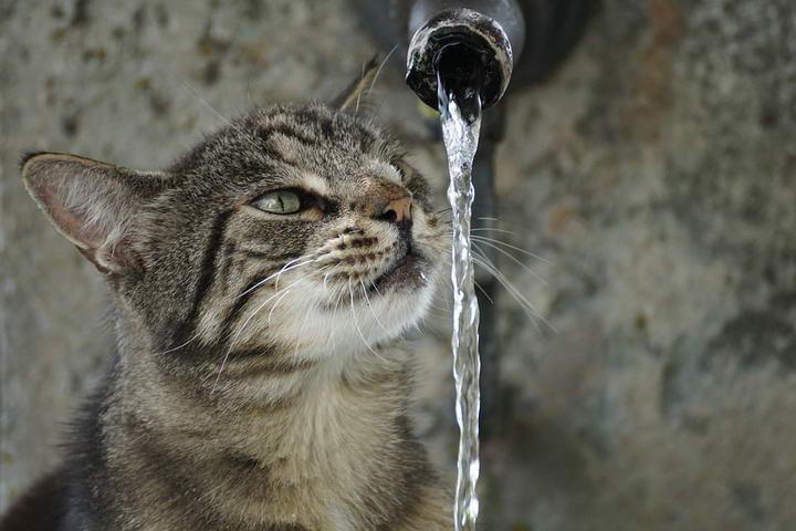 喂猫误区三:无法为猫咪提供足量干净的水分