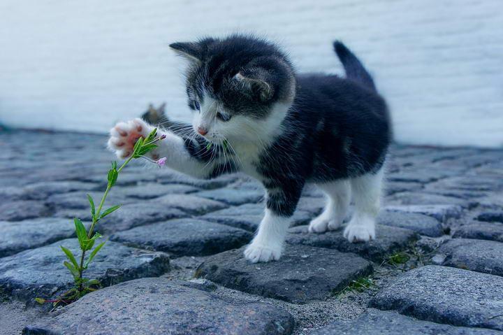 喂猫误区四:总感觉猫咪营养不良,所以要多补充营养品