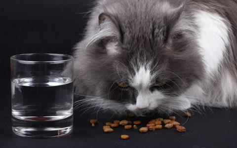 猫咪为何总爱打翻猫粮呢?很有可能是这三个原因