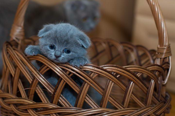 新生小猫应该如何护理?新手如何照料幼猫
