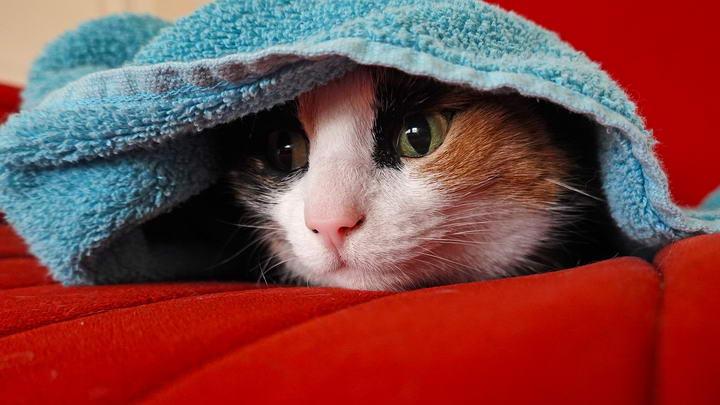 地震来了不要怕,帮助猫咪正确应对地震灾害