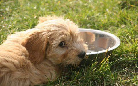 如何判断我的狗狗有没有尿道或者膀胱结石?