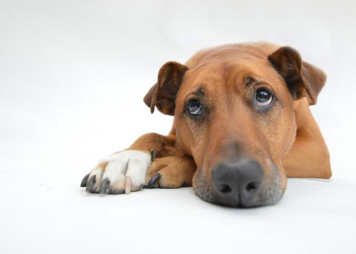 该怎么做才能舒缓狗狗敏感的胃