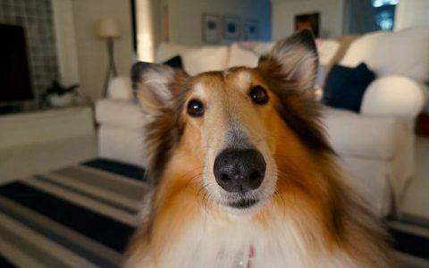 狗狗的糖尿病:你必须知道的事