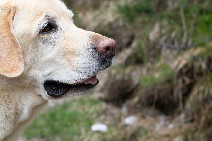 狗狗肾脏疾病记实