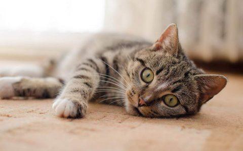 10 个小技巧,让家里免受幼猫魔爪摧残