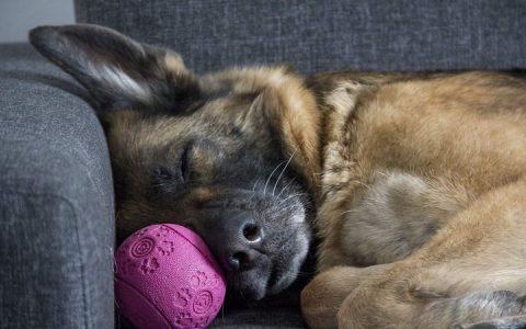 狗狗的肠胃道不适与消化不良:类型与原因