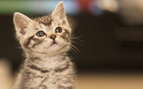 幼猫慢慢长大,它的需求也随之转变