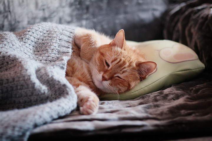 控制猫咪毛球的有效秘诀