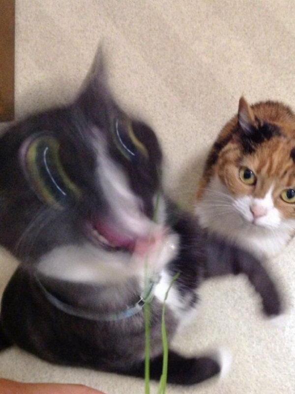 黑猫的控诉:二货猫奴专拍猫咪崩图,崩得没底线