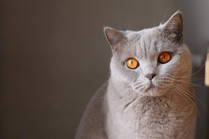 人们喜欢猫咪的七大理由
