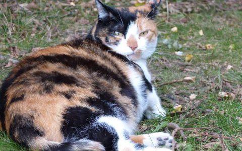 怀孕期及哺乳期的猫妈妈饮食注意事项