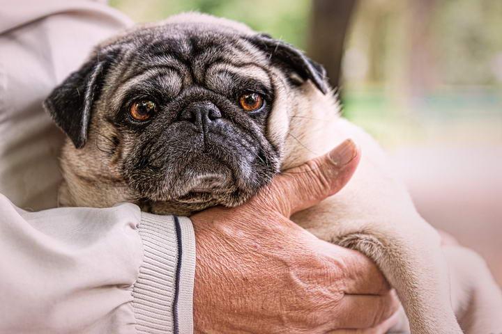 老年人收养狗狗:选择完美同伴的窍门
