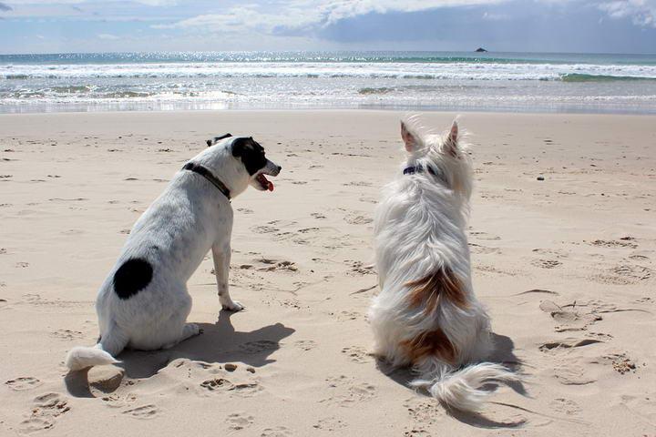 狗狗的热衰竭:狗狗过热的症候