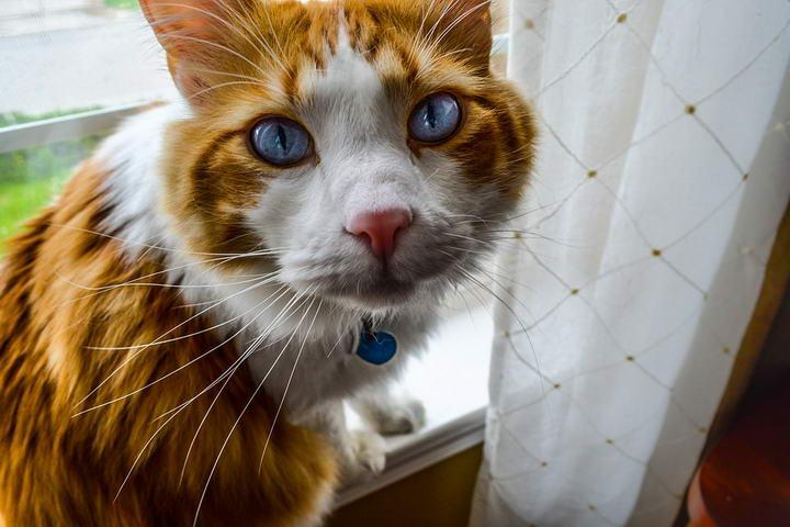 猫咪为什么会食物过敏或食物不耐?