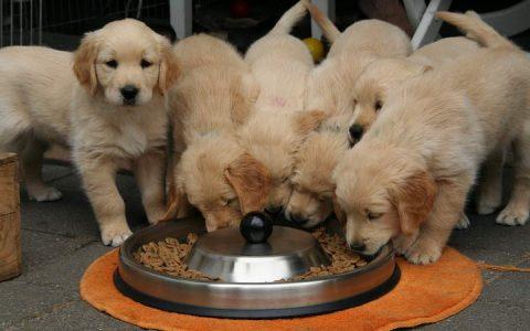 该为狗狗选择干狗粮还是湿狗粮?