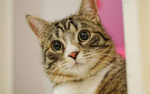 抗氧化剂:猫咪对抗自由基的燃料