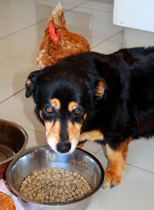 狗狗挑食怎么办?