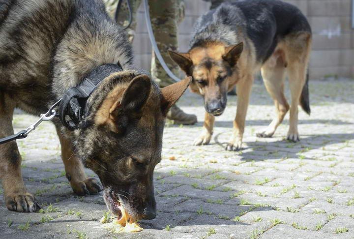 为何狗狗会在进食后呕吐