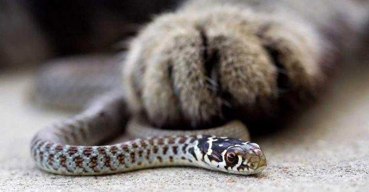夏天要预防宠物狗狗和猫咪被毒蛇咬
