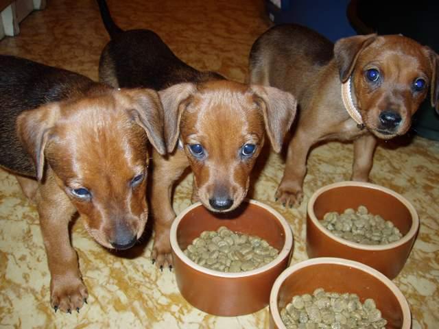 狗狗不同年龄阶段的最佳宠物狗食品