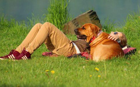 最适合大型犬的运动