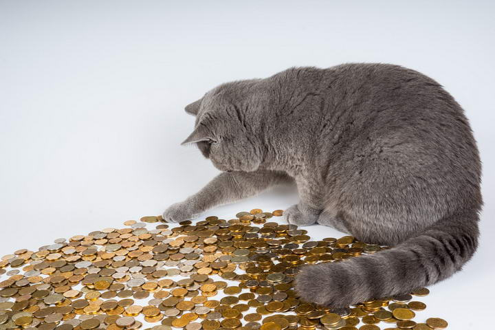 猫咪的锌中毒的原因,症状和治疗