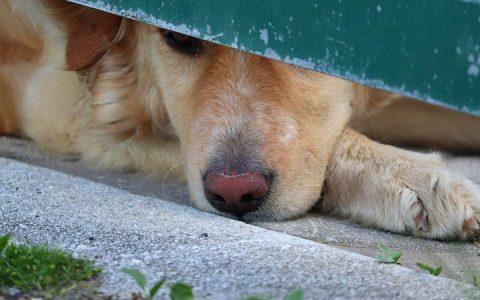 宠物狗狗猫咪皮肤过敏怎么办?