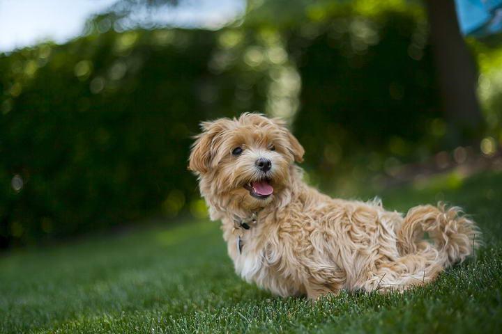 夏天闷热潮湿的天气容易导致宠物3大皮肤病