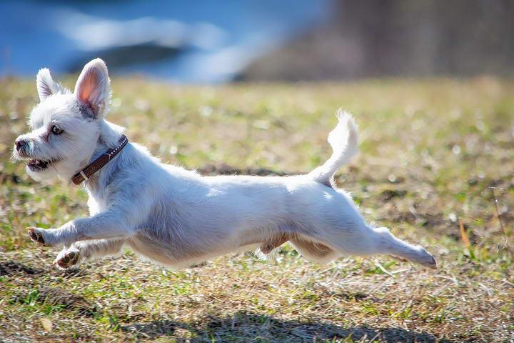 运动得对,可以让狗狗更健康