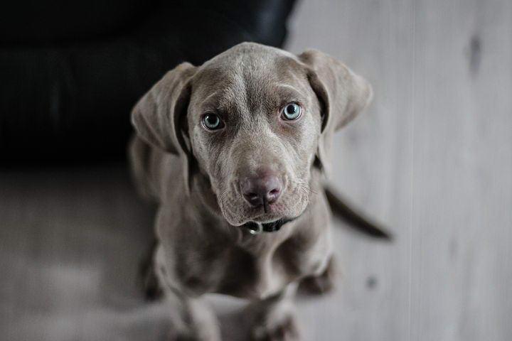 狗狗不吃就算了还把狗粮弄出碗外是怎么回事