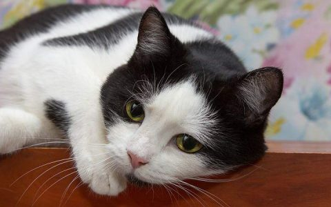 猫咪为什么晚上很活跃不睡觉?