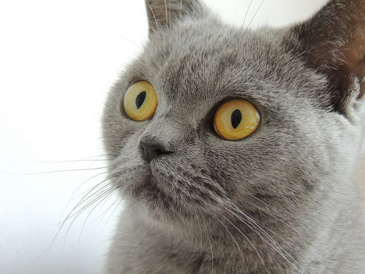 猫奴不可不知的猫咪生活习性