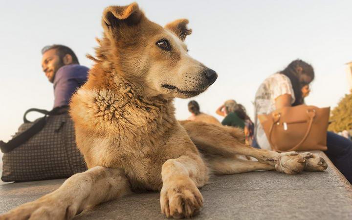 哪些原因会导致狗狗不吃东西?