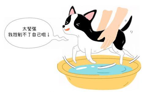 为什么抱起狗狗洗澡的时候,它会在空中做出游泳的动作