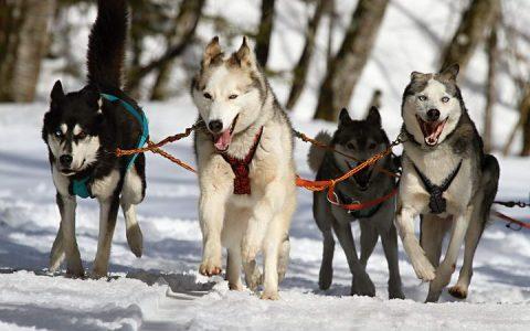 谁是世界上最聪明的狗狗?狗界的学霸原来是……