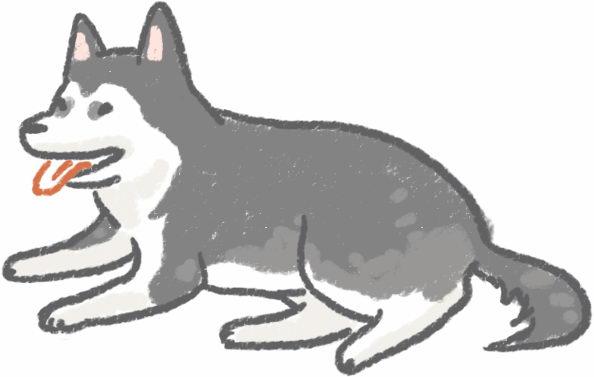 狗狗平均寿命大调查可以陪伴我多久?