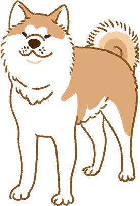 这只柴犬怎么那么大只?喂!人家是秋田犬啦!
