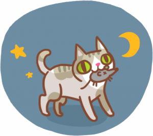 猫咪看见的世界,跟我们人类是一样的吗?