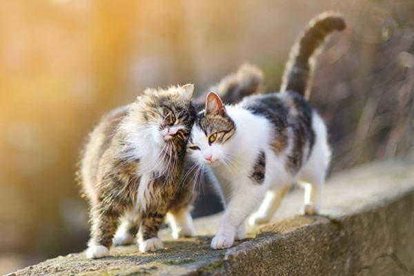 为什么猫咪总是喜欢蹭人?