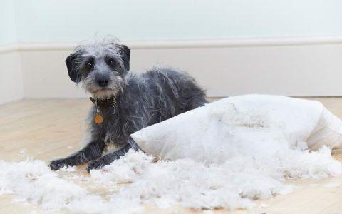 狗狗犯错了应该如何教育?可以揍它打它么?