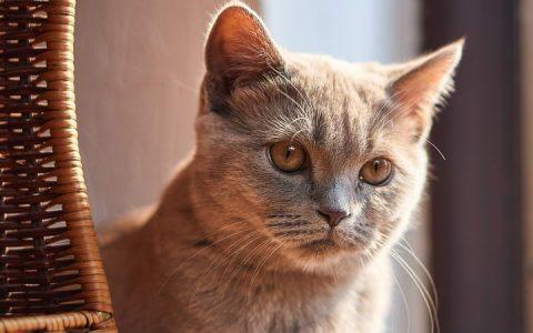猫咪为什么会呕吐和拉肚子