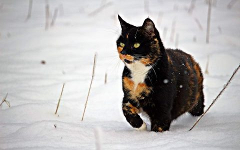 和猫咪一起过一个暖暖的冬天吧