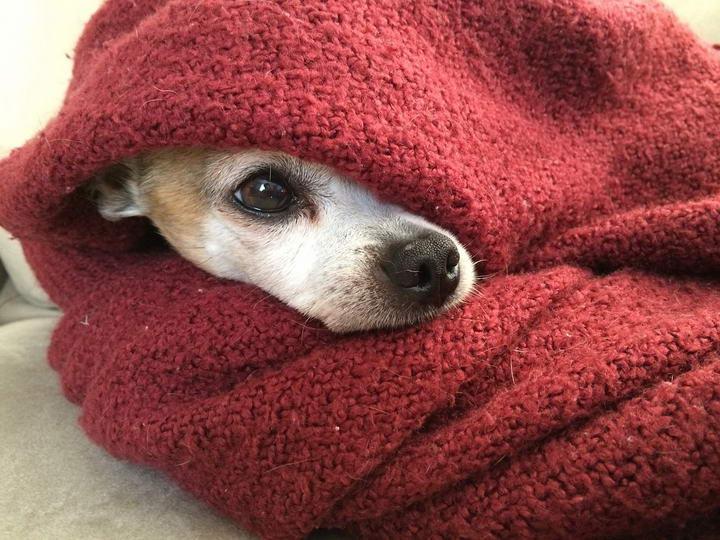 冬天狗狗要穿衣服么?