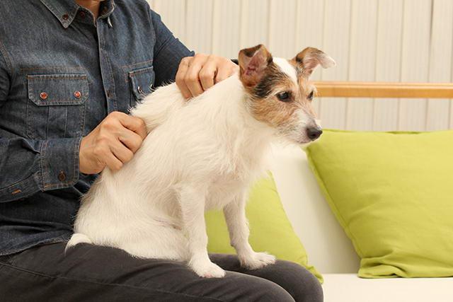 手把手教你如何给狗狗经络按摩