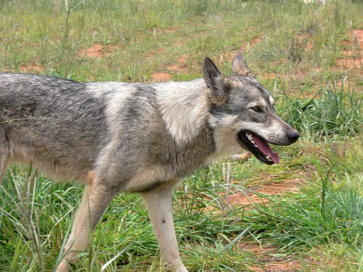 虽然被叫做狂犬病但并不是只是狗狗的专利