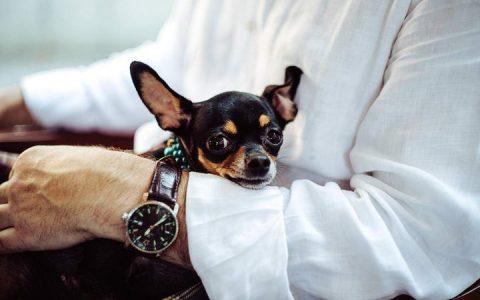 各品种狗狗容易患有哪些先天遗传的疾病?
