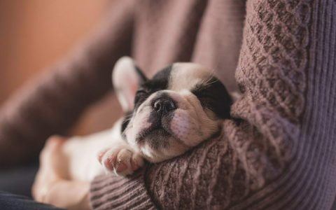 宠物猫咪和狗狗失温的诊断和处理
