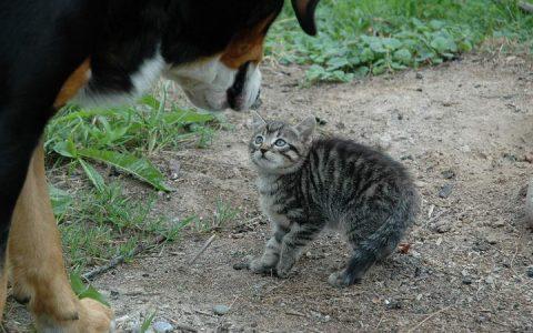 宠物猫咪和狗狗疼痛发抖VS寒冷害怕